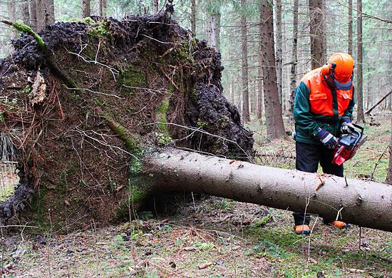 Skadade, vindfällda träd